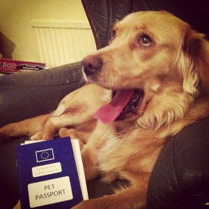 dog pet passport defra