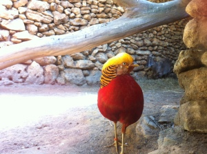 Castellar Zoo Spain