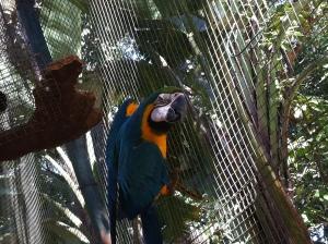 Castellar Zoo Spain Parrot